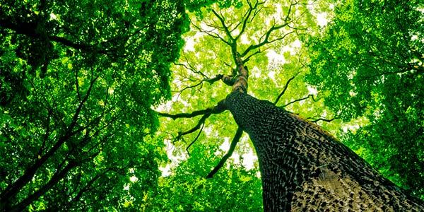 O ano novo das árvores