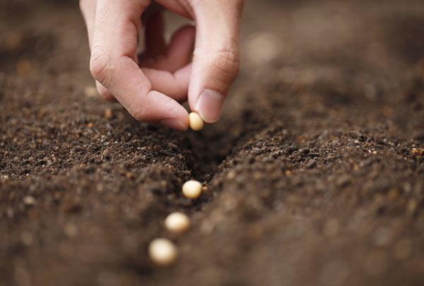 Voltar às sementes da vida